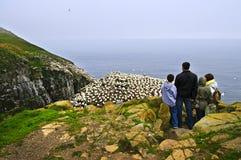 посещение st mary s семьи плащи-накидк птицы Стоковая Фотография RF