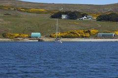 Поселение западного пункта в Фолклендских островах Стоковая Фотография