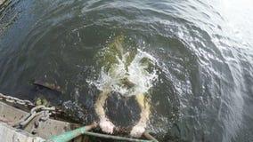 Поскачите в воду акции видеоматериалы
