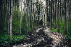 Поскачите в дороге леса леса тинной сделанной ветвей дерева Литва Стоковое Изображение