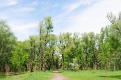 Поскачите в острове зеленого цвета парка, Омске, России Стоковая Фотография