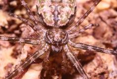 Поскачите паук Стоковые Фото