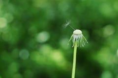 последнее семя Стоковое Изображение