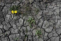 последнее цветка Стоковые Фото