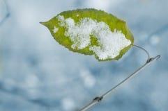 последние листья Стоковое Изображение