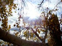 Последние лучи осени греют на солнце и листья Стоковое фото RF