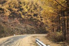 Последний желтый цвет осени Стоковые Изображения