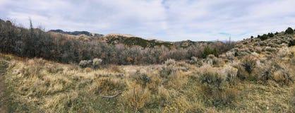 Последний лес панорамы падения осматривает пеший туризм, велосипед, верхом отстает через деревья на желтой вилке и розовый каньон стоковое изображение