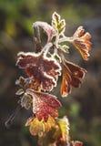 Последняя красота морозного цветка стоковое изображение