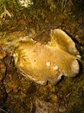 Последняя осень в России, грибы в лесе стоковые изображения rf