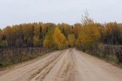 Последняя осень, грачонк летела прочь, древесины нагие Стоковые Изображения