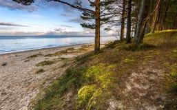 Последняя осень на пляже лесохозяйства Jurmala Стоковые Фото