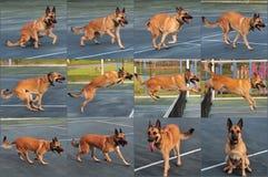 последовательность собаки скача стоковые изображения