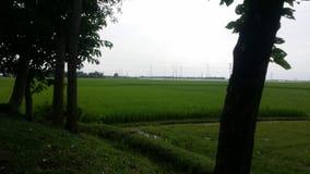 После взгляда дождя больших зеленых полей Стоковые Фото
