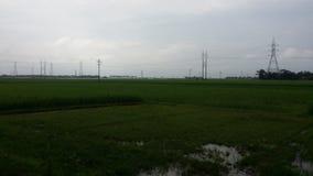 После взгляда дождя больших зеленых полей Стоковые Изображения