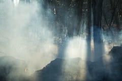 После лесного пожара стоковое изображение