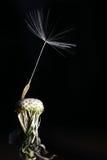 последнее семя Стоковое фото RF