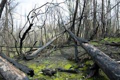 После огня в деревне Boco Стоковые Фото