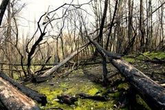 После огня в деревне Boco Стоковые Изображения