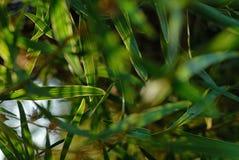 После полудня как увидено через листья на дереве стоковое фото rf