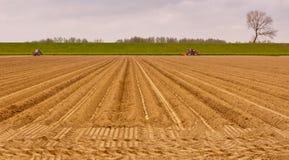 после полудня поздно засаживая картошки Стоковые Фото