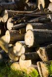 после полудня сентябрь woodpile стоковое фото rf