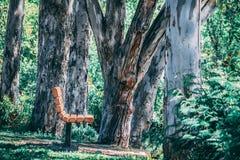 После полудня скамейкой в парке стоковые фото
