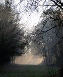 после полудня туманнейшее стоковое фото rf