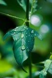 После дождя Стоковые Фотографии RF