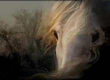 Посмотрите белую лошадь стоковая фотография rf