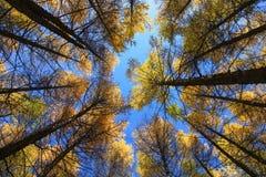 Посмотрите вверх деревьев в средней солнечности в Wulanbutong в Внутренней Монголии стоковые фото