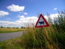 Посмотрите вне для коров! Стоковые Фото