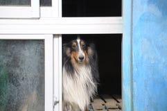 Ожидани-и-те собаку Стоковая Фотография RF