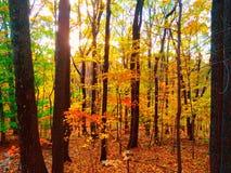 Посмотрите в древесинах Стоковая Фотография RF