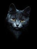 Посмотрите из темноты стоковое фото