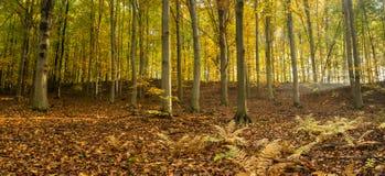 Посмотрите лес осени Стоковые Изображения RF