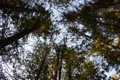 посмотрите небо к Стоковое Фото