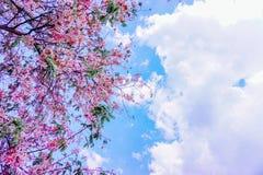посмотрите небо Стоковые Фотографии RF