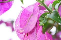 Посмотрите! Оно ` s mantis Стоковое Фото