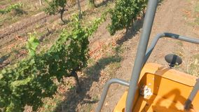 Посмотрите от машины сбора виноградины к виноградникам акции видеоматериалы