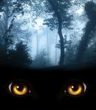 Посмотрите от темноты Стоковое Фото