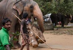 Посмотрите позже слонов стоковое фото rf