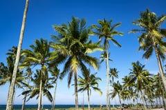 Посмотрите, что вверх взгляд кокосовой пальмы показать красивую синь sk Стоковая Фотография RF