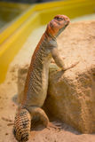 Посмотрите ящерицы Стоковые Фото