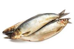 Посоленные рыбы сельдей Стоковое фото RF
