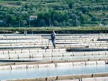 Посолите лотки sicciole, Pirano, Словении, Европы Стоковые Фото