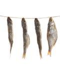Посоленные рыбы на веревочке вертикально Стоковое Изображение
