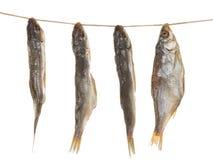 Посоленные рыбы на веревочке Стоковая Фотография RF