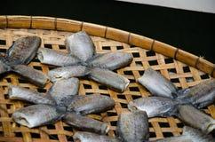 Посоленные рыбы Стоковая Фотография