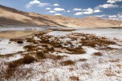 Посолите покрытые заводы и банки озера Tso Kar, Ladakh, Индии Стоковое фото RF